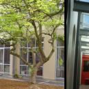 Extension du self et de l'administration de l'institut N.D. de la Providence à Thionville (57)